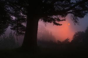 Ethereal Sun Rising in the Mist, Oakland, California by Vincent James
