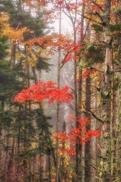 Fall Color and Mist II by Vincent James