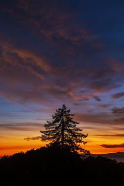 Fall Color in Sunset Sky and Tree Over Berkeley by Vincent James