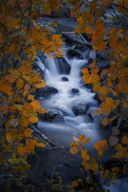 Fall Hideout - Fall Color, Bishop Creek Canton, Eastern Sierras California by Vincent James