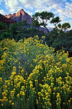 Flowery Canyon, Watchman and Pa Rus Trail, Zion National Park, Utah by Vincent James