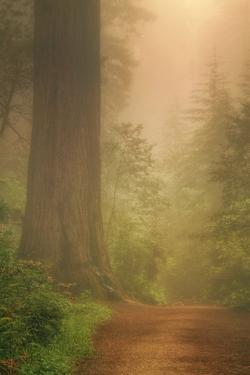Forest Trail by Vincent James