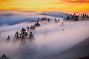 Golden Flow Fog Over Mount Tamalpais, Northern California by Vincent James