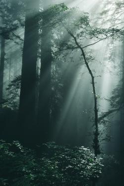 Green Forest Light, California Redwoods, Del Norte Coast by Vincent James