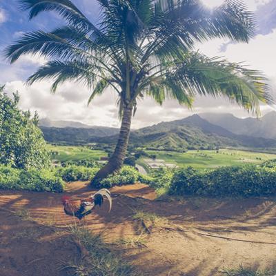 Hanalei Chicken Landscape, Kauai Hawaii by Vincent James