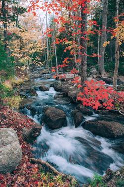Jordan Stream in Autumn, Maine Coast, Acadia National Park by Vincent James