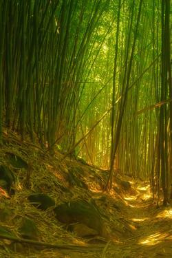 Light and Bamboo Forest, Road to Hana, Maui by Vincent James