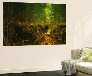 Light in the Bamboo Forest, Maui by Vincent James