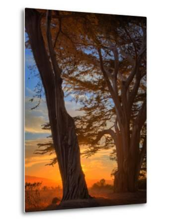 Magical Cypress Sunrise, Point Reyes National Seashore by Vincent James