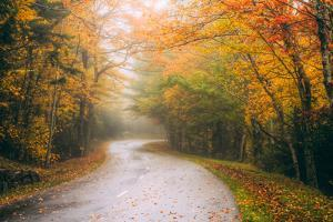 Misty Maine Road in Autumn, Bar Harbor, Acadia National Park by Vincent James