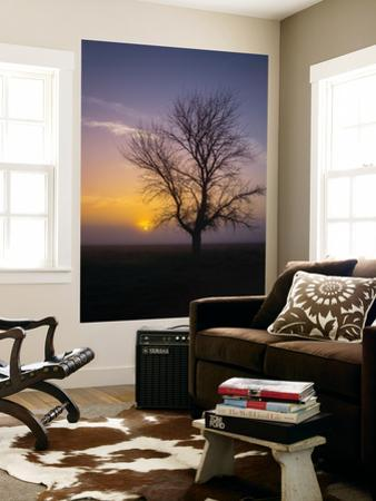 Misty Morning Sun and Tree Design II by Vincent James