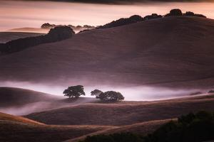 Mood and Mist and Morning Light, Petaluma Sonoma California by Vincent James