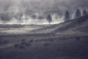 Moody Bison Landscape, Yellowstone by Vincent James