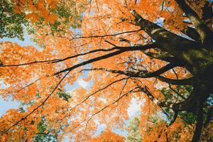 New England Autumn Color Design - Boston Massachusetts by Vincent James