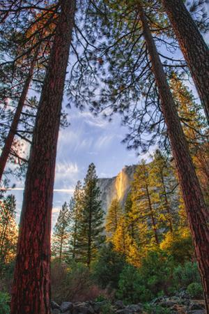 North View Through The Trees, Firefall, Horsetail Falls, Yosemite National Park by Vincent James