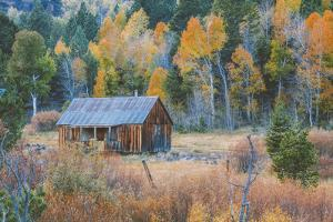 Old Cabin in Autumn Woods Hope Valley California by Vincent James