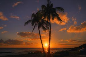 Palm Trees and Setting Sun, Kauai Hawaii by Vincent James