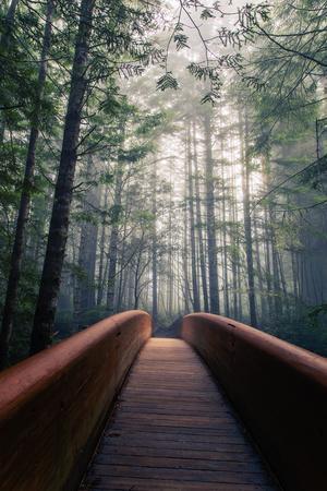 Path To Adventure - Redwoods Emerald Forest - California Coast
