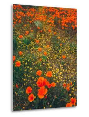 Poppy Field Design, Central California by Vincent James