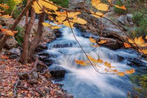 Scene of Autumn Leaves and Duck Brook by Vincent James