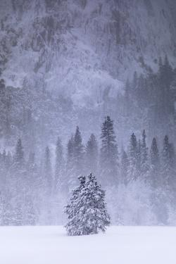 Snow Tree Peace Winter Meadow Beautiful  Yosemite Valley by Vincent James