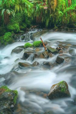 Spring Creek Detail, Columbia River Gorge, Oregon by Vincent James