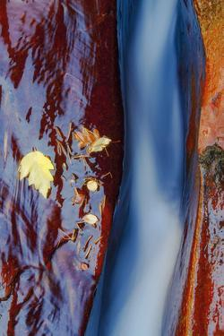 Subway Detail, Autumn Zion National Park, Natural Wonder, Southern Utah by Vincent James