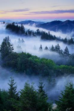 Summer World of Mount Tamalpais, San Francisco, California by Vincent James
