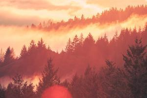 Sun Burned Fog Mount Tamalpais, Marin County, San Francisco by Vincent James