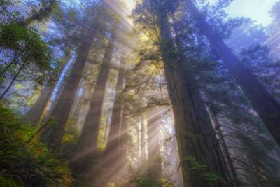 Tree Power, California Coast by Vincent James