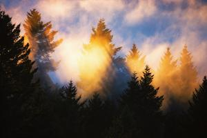 Trees, Fog and Sunset Light Mix, Peaceful Nature, San Francisco by Vincent James