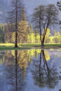 Valley Reflections at Yosemite by Vincent James