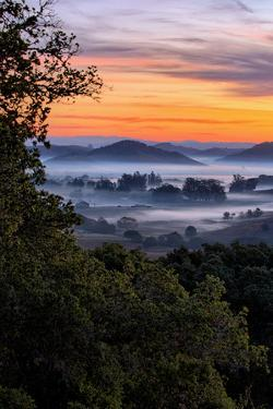 View From The Trees, Sunrise Petaluma Hills, Sonoma County by Vincent James
