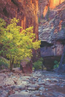 Virgin Narrows Nook, Zion by Vincent James