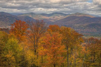 Wild Fall Color, White Mountain New Hampshire by Vincent James