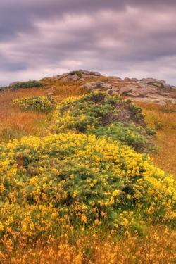 Wildflower Coast by Vincent James