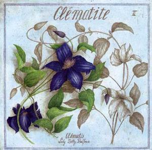 Clematite by Vincent Jeannerot