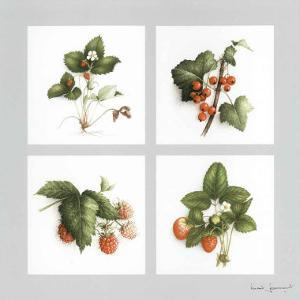 Fruits Rouges by Vincent Jeannerot