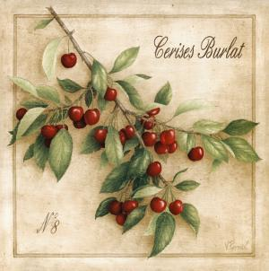 Cerises Burlat by Vincent Perriol
