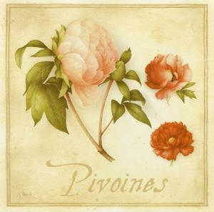 Pivoines by Vincent Perriol