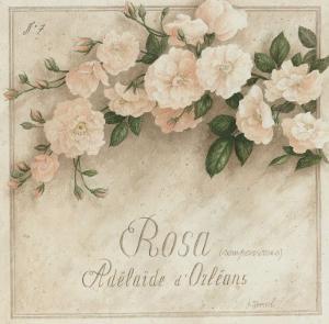 Rosa, Adelaide d' Orlean by Vincent Perriol