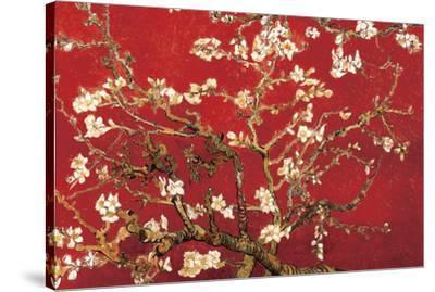 Almond Blossom - Red