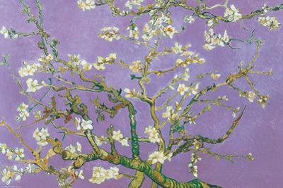 Vincent Van Gogh Almond Blossoms Lavender Art Print Poster