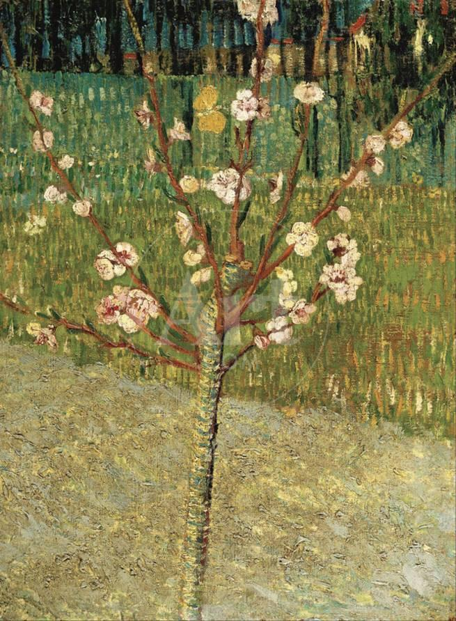Almond Tree In Blossom 1888 Prints By Vincent Van Gogh At
