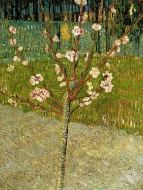 Almond Tree in Blossom, 1888 by Vincent van Gogh