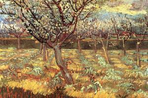 Apricot Trees in Blossom by Vincent van Gogh