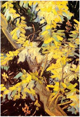 Vincent Van Gogh Blossoming Acacia Branches Art Print Poster