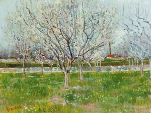 Blossoming Orchard, 1888 by Vincent van Gogh
