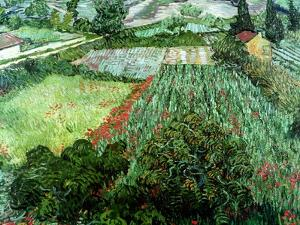 Field of Poppies, Saint-Remy, c.1889 by Vincent van Gogh