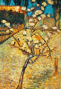 Vincent Van Gogh Flowering Pear Art Print Poster